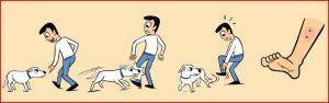 dog bite primary treatment